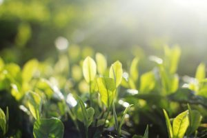 Spring Into Mindfulness